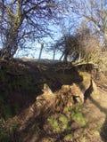 Träd på land går, norr Northumberland, UK Arkivbild