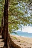 Träd på Mai Khao Royaltyfria Bilder
