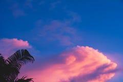 Träd på molnigt med himmel på aftonbakgrund Royaltyfria Bilder
