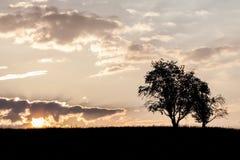 Träd på morgonen Arkivfoto