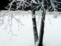 Träd på natten i snö Royaltyfria Foton