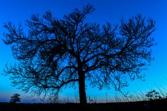 Träd på natten - UK Arkivfoto