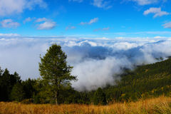 Träd på ovannämnda moln för bergsida Arkivbild