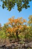 Träd på Pandav faller på Panna National Park, Madhya Pradesh, Indien Royaltyfria Foton