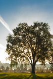 Träd på parkera Royaltyfria Foton