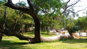 Träd på Pondicherry, Indien royaltyfri foto