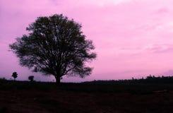 Träd på rosa himmel Royaltyfri Bild