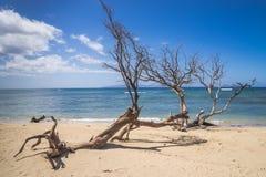 Träd på sandstranden Arkivfoto