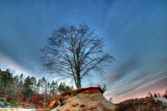 Träd på sandtop Royaltyfri Fotografi