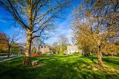 Träd på Sherwood Gardens Park, i Baltimore, Maryland Fotografering för Bildbyråer