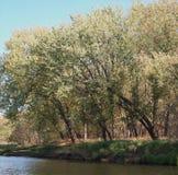 Träd på shorelinen Royaltyfri Foto