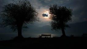 Träd på sidan av Garda sjön på Malcesine royaltyfri foto