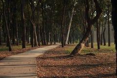 Träd på sidovägen i parkera Arkivbild