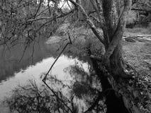 Träd på sjön Arkivbilder