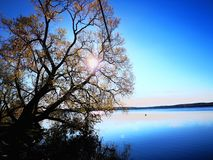 Träd på sjön arkivfoto