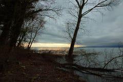 Träd på sjön Royaltyfria Foton