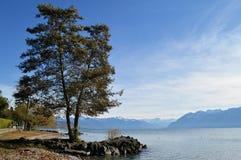 Träd på sjön med berg i bakgrunden Royaltyfri Fotografi