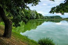 Träd på sjön, reflexionen i sjön, sommarlandskap Royaltyfri Bild