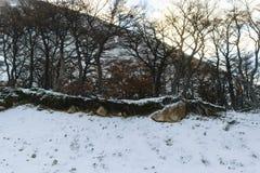 Träd på snö royaltyfri foto