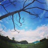 Träd på solnedgången Fotografering för Bildbyråer