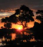 Träd på solnedgången - fyrkant Arkivfoton
