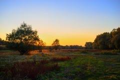 Träd på solnedgångtid och färgrik himmel Arkivfoton