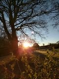 Träd på soluppgång Arkivfoto