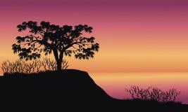 Träd på soluppgånglandskap Arkivbilder
