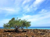 Träd på stenstranden royaltyfria foton