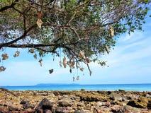 Träd på stenstranden arkivfoto