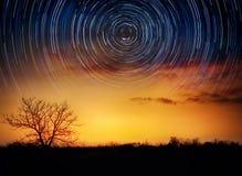 Träd på stjärnklar bakgrund med ljusa stjärnor skuggar Tid schackningsperiod, Fotografering för Bildbyråer