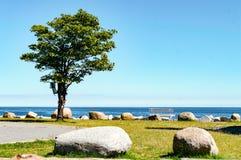 Träd på stranden Fotografering för Bildbyråer