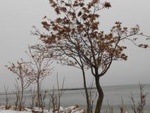 Träd på stranden Arkivfoto