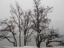 Träd på stranden Royaltyfri Foto