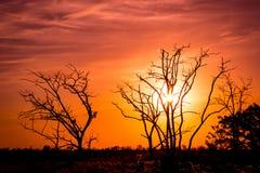 Träd på susnetbakgrund Royaltyfri Foto