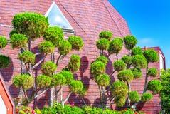 Träd på taket i Hollywood, Kalifornien royaltyfria bilder