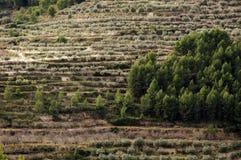 Träd på terrasser arkivbilder