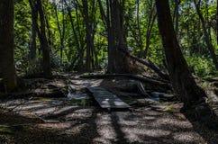 Träd på Ushuaia, Argentina royaltyfria bilder