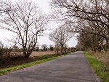 Träd på vägen på sidan av lantgårdar Arkivbild