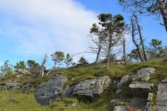 Träd på vaggar i en Forest Park, Co Donegal Irland royaltyfri fotografi