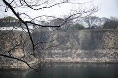 Träd på vinter på Osaka Castle Arkivfoton