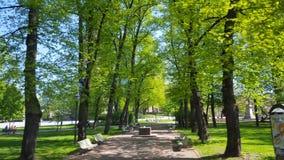 Träd parkerar in bänkar Arkivbild