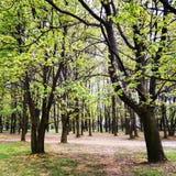 Träd parkerar i vår Royaltyfri Foto