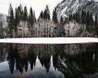 Träd reflekterade i den Merced floden Arkivfoton