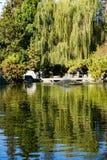 Träd reflekterade i en man som gjordes dammet, den japanska kamratskapträdgården, San Jose, Kalifornien royaltyfri fotografi