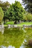 Träd reflekterade i en man som gjordes dammet, den japanska kamratskapträdgården, San Jose, Kalifornien fotografering för bildbyråer