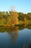 Träd reflekterade i ett damm Fotografering för Bildbyråer