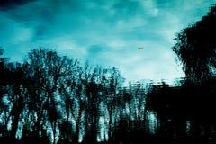 Träd reflekterade i floden Arkivfoto