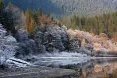 Träd reflekterade i vattnet på en frostig morgon arkivbild