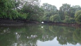 Träd reflekterade på krusigt sjövatten arkivfilmer